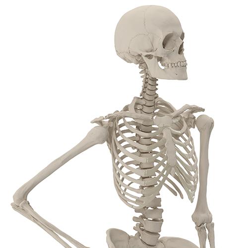石灰沈着性腱炎の原因は石灰化にあった:アトラアカデミー