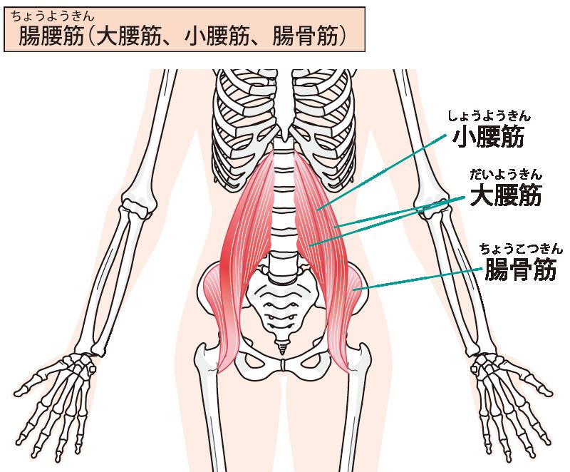 腸腰筋を鍛えても「使えなければ」不調は取れない?:アトラアカデミー